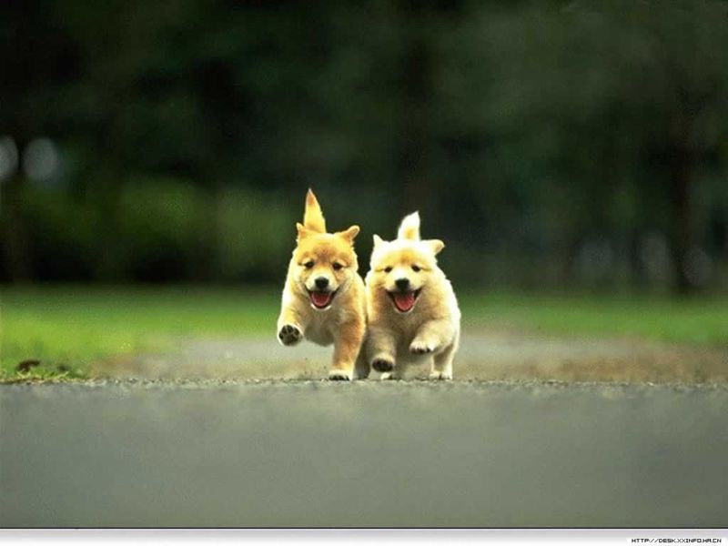 Cute puppies running